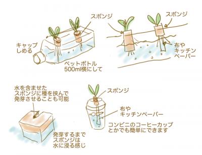 身の回りのもので簡単水耕栽培