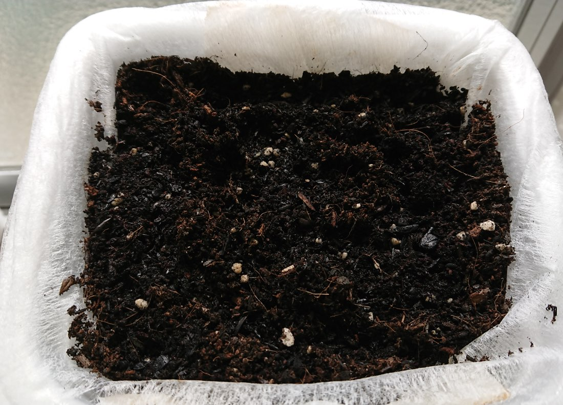 二十日大根種まき直後